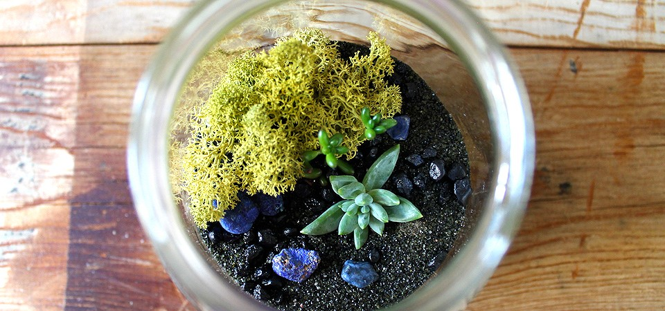 Blue Rock Terrarium