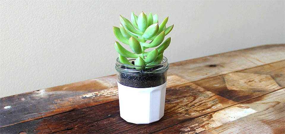 Hand Dipped Jar with High-Rise Succulent