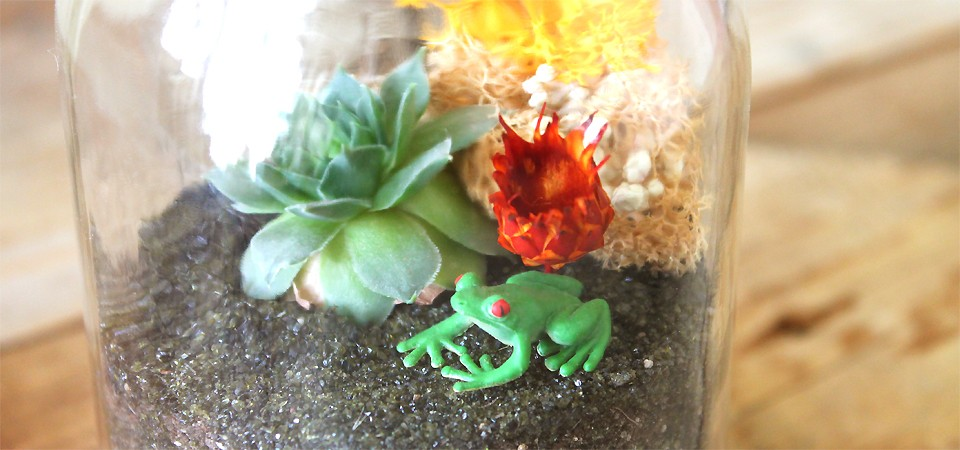 Enchanting Frog Terrarium