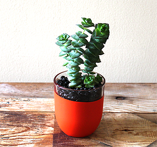Tomato-Red Planter
