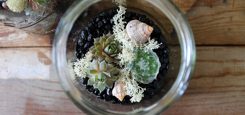 Medium Seashell Terrarium