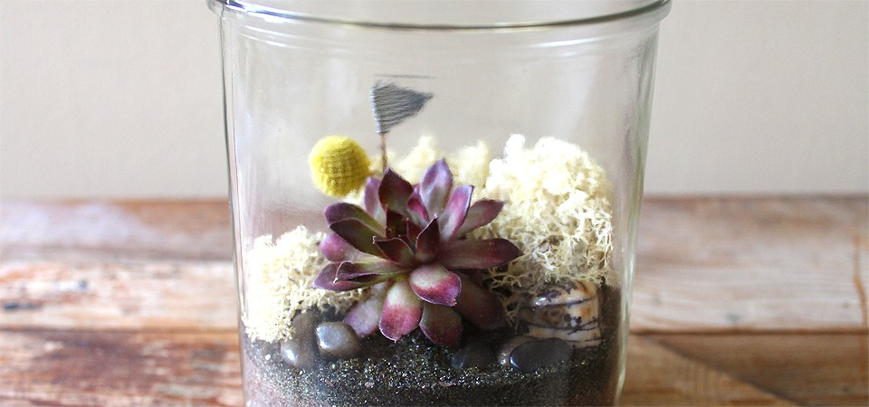 Vintage Natural Wonder Terrarium