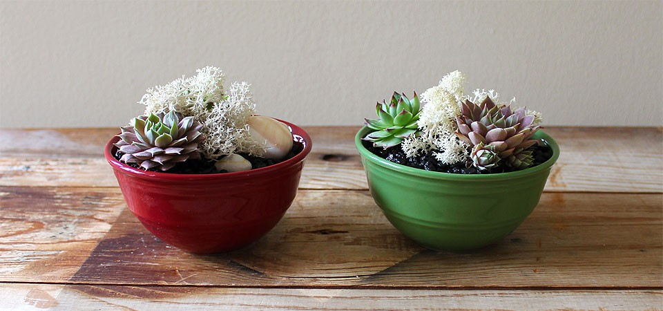 Succulents in Cranberry-Red Bowl