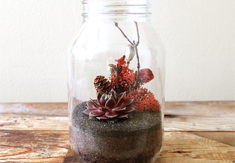 Red Meadow Terrarium