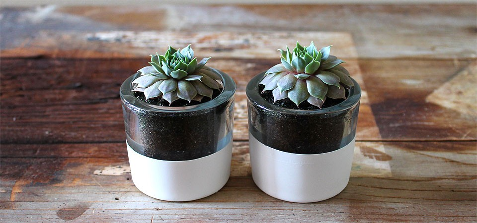 Hand-Dipped White Succulent Round