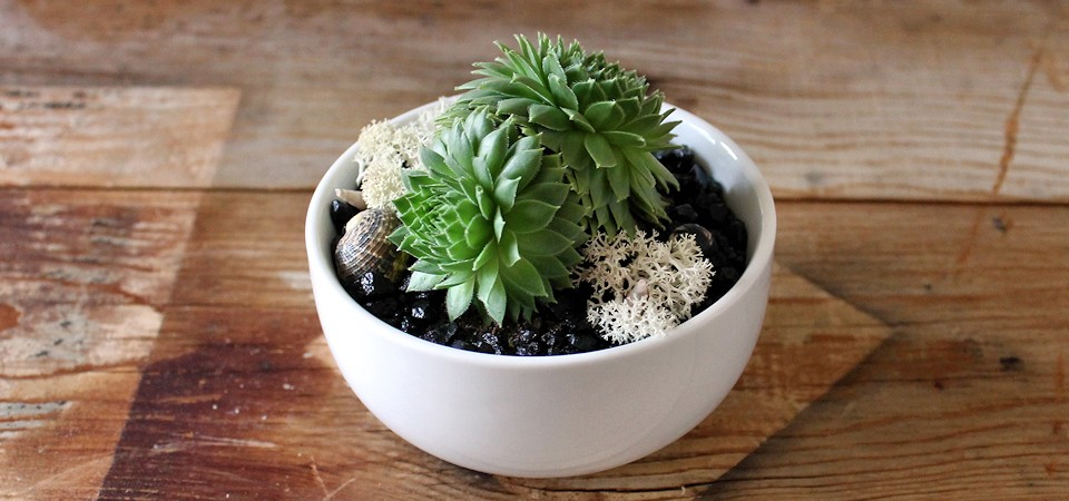 Classy Green Succulent in White Bowl