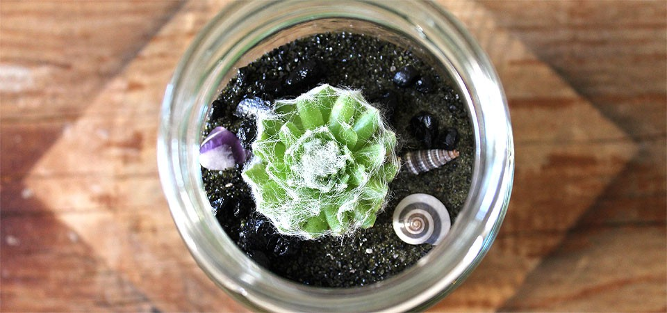 Miniature Beachy Jar with Fuzzy Succulent