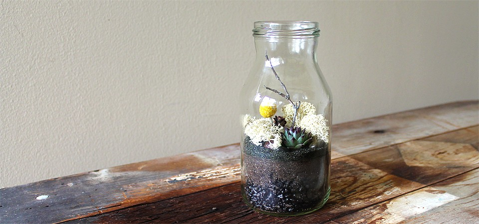 """Milk Bottle"" Terrarium"