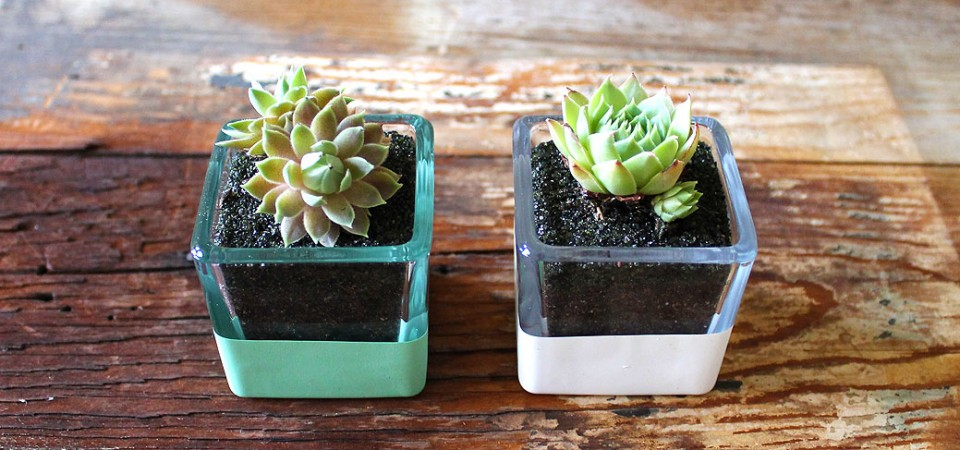 Hand-Dipped Succulent Square
