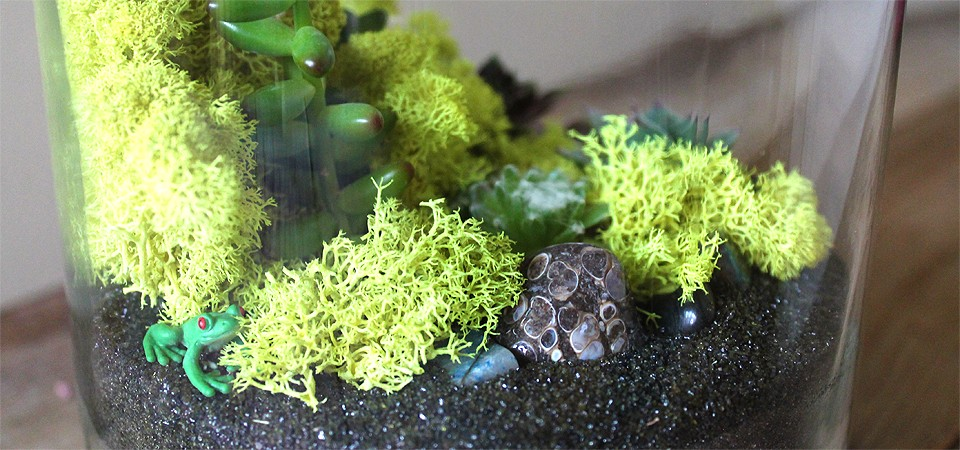 Spring Garden Terrarium with Engaging Frog