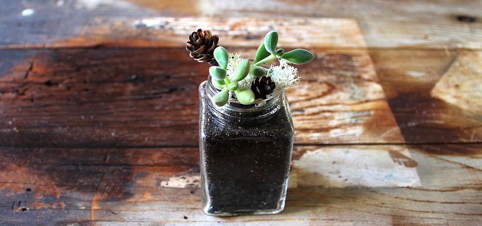 Succulents in Vintage Squared Jar