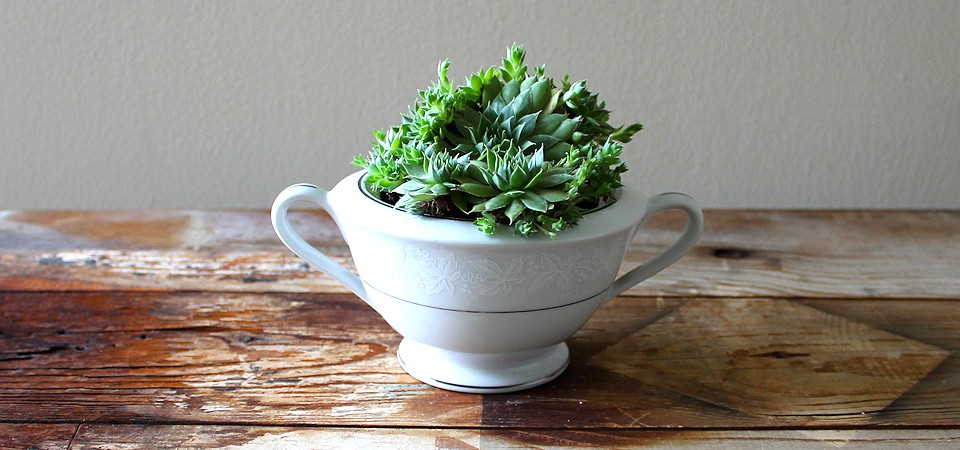 Clustered Succulents in Sugar Bowl