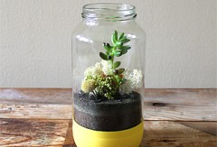Golden Orchard Terrarium