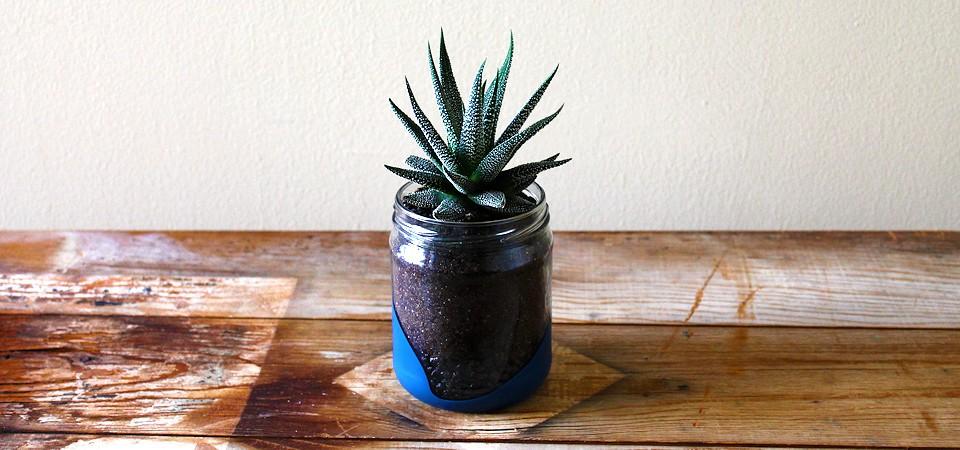 Spotted Zebra in Vibrant Blue Jar