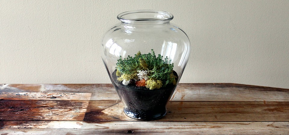 Sedum Acre in Large Terrarium