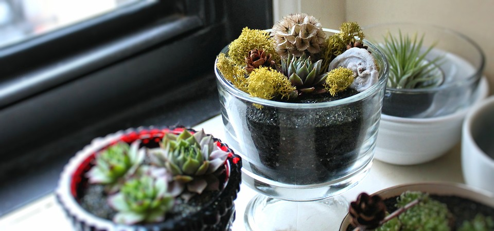 Succulent Garden in a Dessert Dish