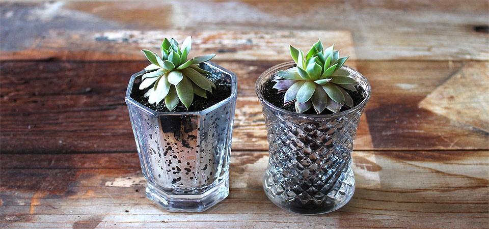 Succulent in Mercury Glass Jar
