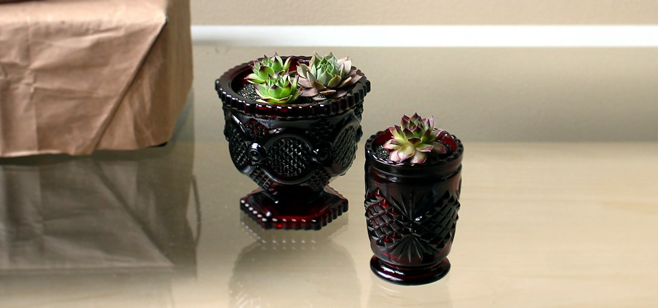 Ruby Red Succulent Set