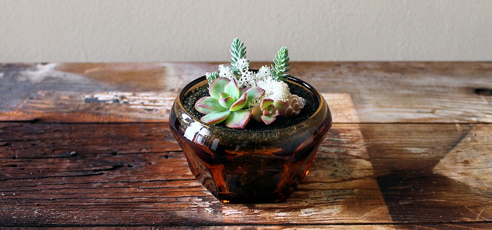 Sedum and Succulents in Vintage Amber Glass Dish