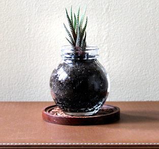 "Zebra Plant in Vintage ""Florida"" Marmalade Jar"