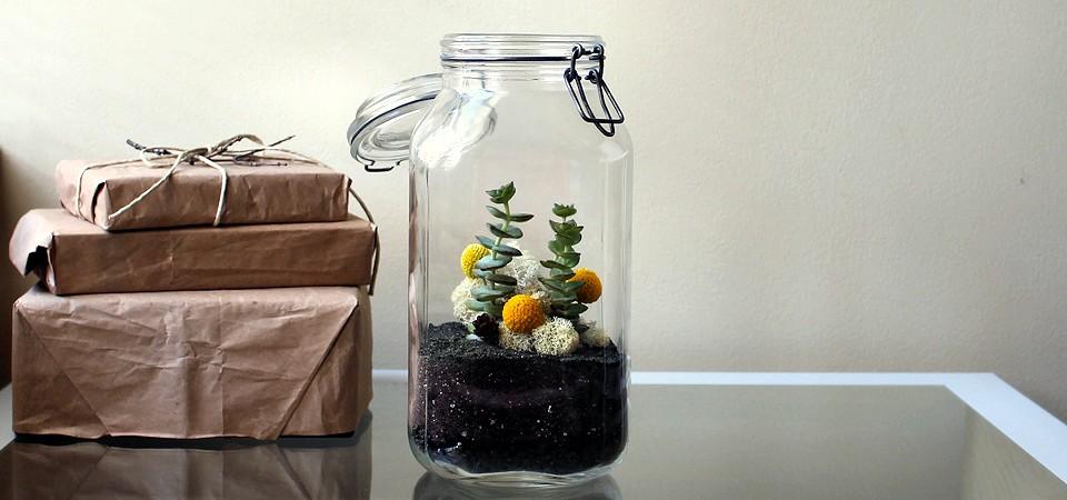 Crassula Perforata in Vintage Storage Jar