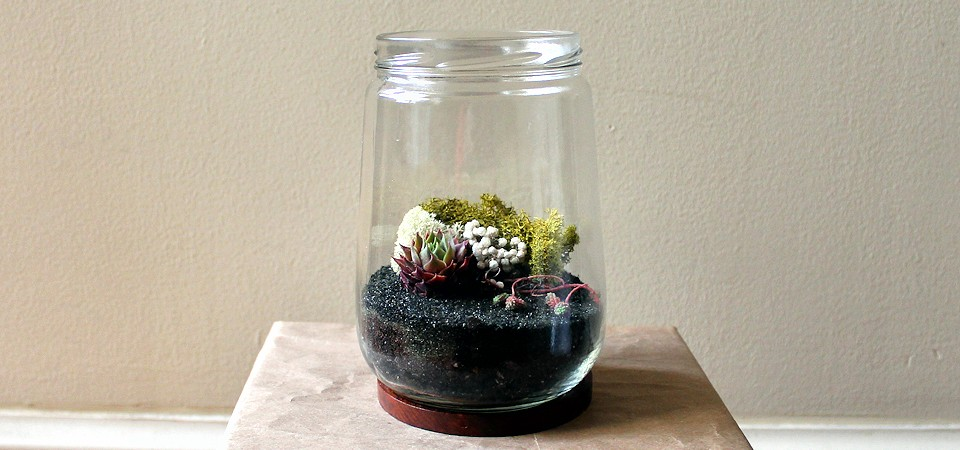Pink and Green Succulents in Vintage Loop Jar Terrarium